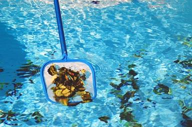 Blog 12 media pool
